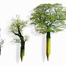 Sustainable Woodland by Andrew Bret Wallis