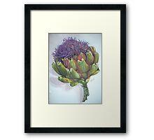 Artichoke Bloom Framed Print