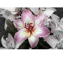 Asian Lily Photographic Print