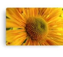 Yellow Up Close Canvas Print