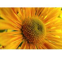 Yellow Up Close Photographic Print