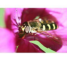 Honest Fly Photographic Print