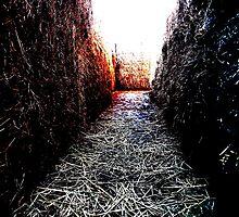 Maze by Hallowaltz