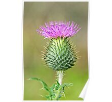 Spear Thistle Poster