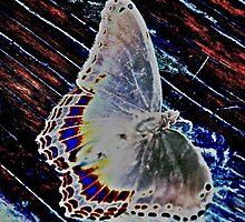 Psych butterfly by GPavlosky
