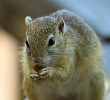 A Tree Squirrel up close by jozi1