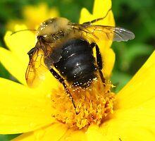 Golden Pollen by MarianBendeth