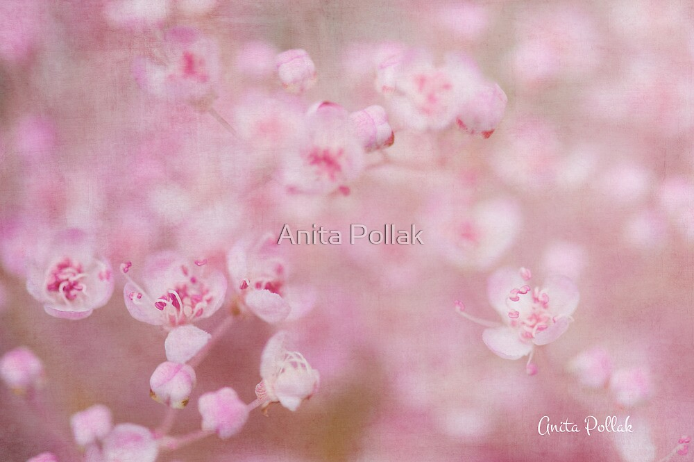 Soft Kisses on a Summer's Day by Anita Pollak