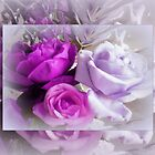 Purple & Pink Roses  by EdsMum