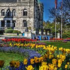 Spring at the Parliament by Yasmin Simpson