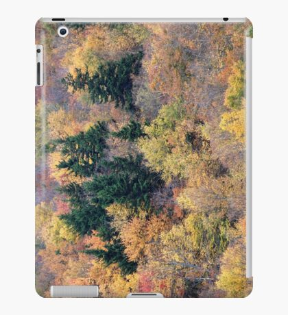 Petersburg Pass iPad Case/Skin