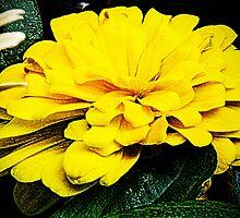 Just Yellow by Terri Chandler