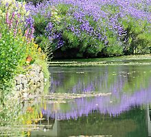 Summer Lavendar at Bibury by DRWilliams