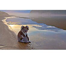Koala Reflections Photographic Print