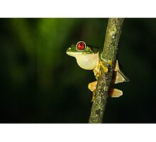 Costa Rican Red Eye Photographic Print