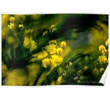 Golden Wattle 1 Poster
