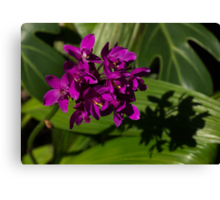 Shadows of Orchids Canvas Print