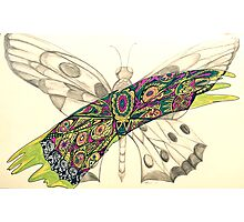Sweeping butterfly  Photographic Print