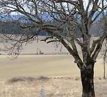 Rural. Spring time. by UpNorthPhoto