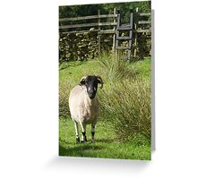 Yorkshire Sheep Greeting Card