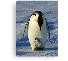 Emperor Parent and Chick Canvas Print