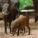 Mother Pig and Her Piglets by Christian Eccleston