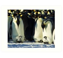 Emperors and Chicks, Auster Rookery Art Print