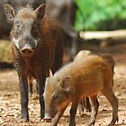 Mother Pig and Her Piglets 2 by Christian Eccleston