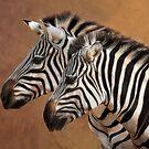 Savana Stripes by Tammara