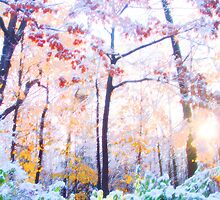 Early Snow, Early Morn by triplelll