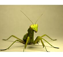 Mantis Photographic Print