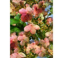 Rococo Blossoms Photographic Print