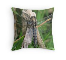 Keeled Skimmer  Dragonfly 01 Throw Pillow