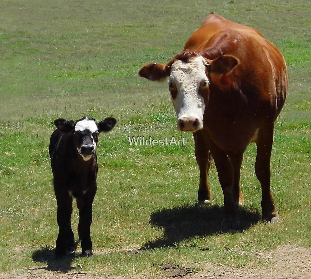 Odd Cow by WildestArt