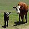 LIVESTOCK MOMS AND BABIES Down On The Farm