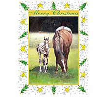 Appaloosa Horse Blank Christmas Card Photographic Print