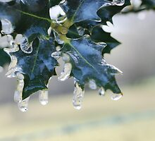 Holly Leaf in Ice by jessicaelyn