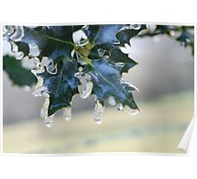 Holly Leaf in Ice Poster