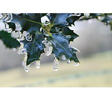 Holly Leaf in Ice Photographic Print
