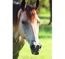 Buckskin Horse Photographic Print