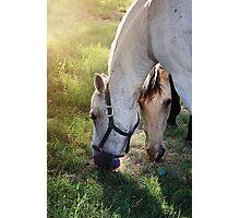 Best Friends-Horses  Photographic Print
