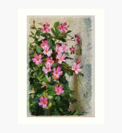 Climbing Pinks Art Print