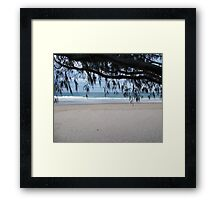 Horsetail Willow Framed Print