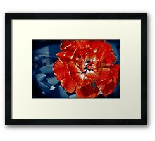 Scarlet Peony Flower Framed Print