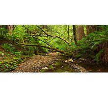 Purisima Creek Redwoods, California Photographic Print