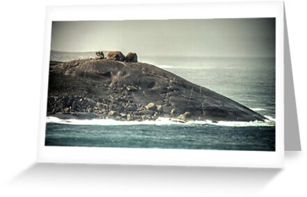 Remarkable Rocks by Dean Wiles