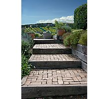 Steps To The Vineyards Photographic Print