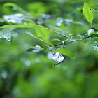 one leaf by Jan Stead JEMproductions