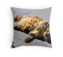 Fat Belly Jimmy Cat. Enjoying the afternoon sun.  Throw Pillow