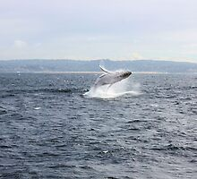 Having a whale of a time! by JDWPhotos